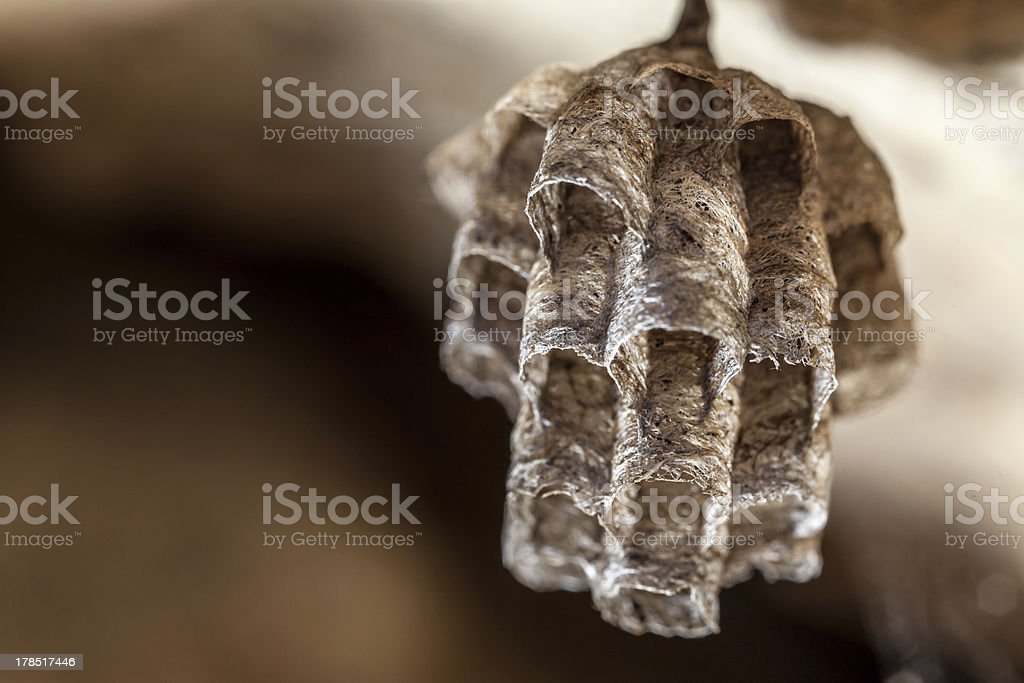 Paper Wasp Nest royalty-free stock photo