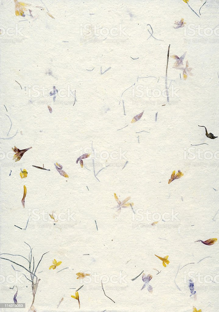 Paper with pressed wildflowers royalty-free stock photo