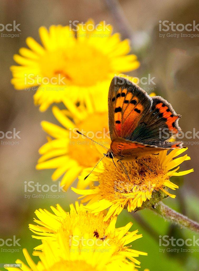 Papillon Sur Fleur Jaune Stock Photo Download Image Now