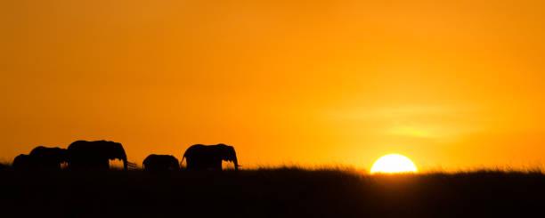 parade der elefanten  - elefanten umriss stock-fotos und bilder