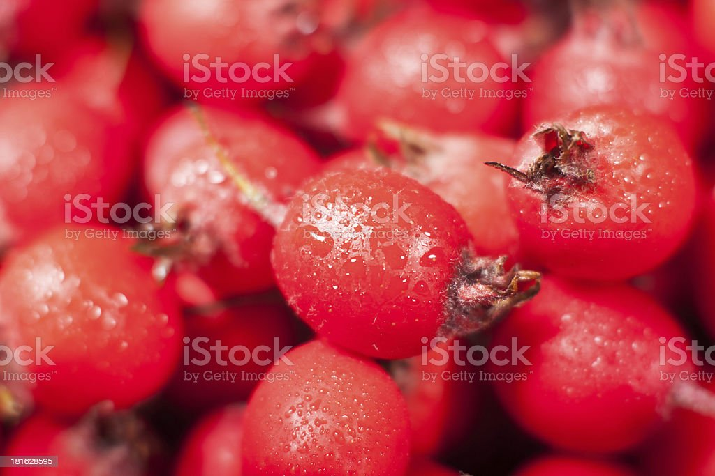 paradise apple mini royalty-free stock photo