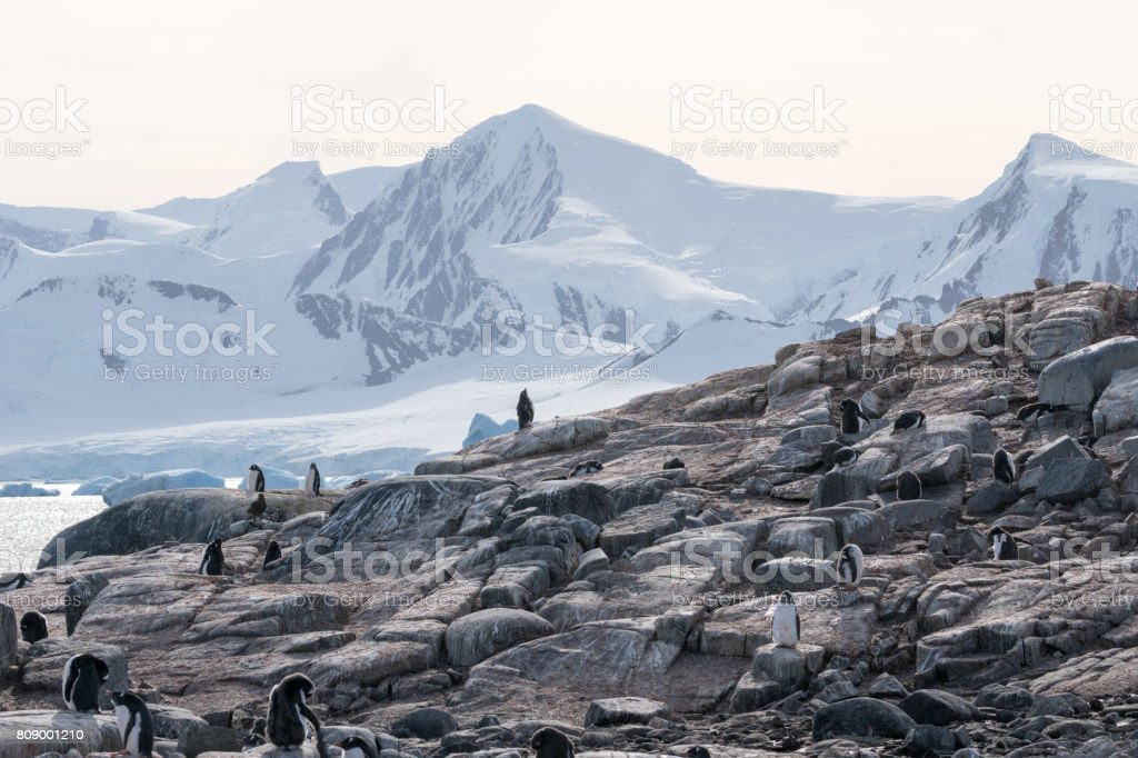 Paradise Bay Pinguine – Foto