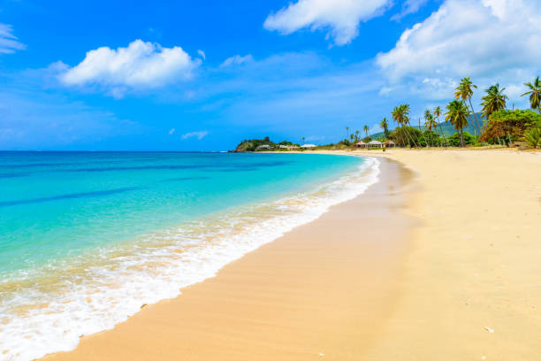 Paradise beach at morris bay tropical caribbean island antigua picture id1011945074?b=1&k=6&m=1011945074&s=612x612&w=0&h=ccptluh bvozicxc1wxshdg0 cu6q6378jd5wu3royo=