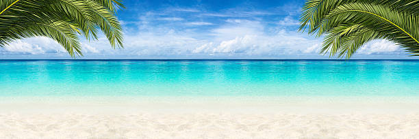 paradise beach background - foto de acervo