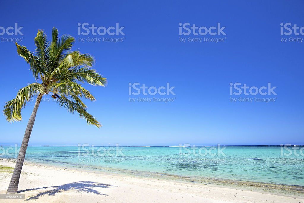 Paradise beach next to palm tree stock photo
