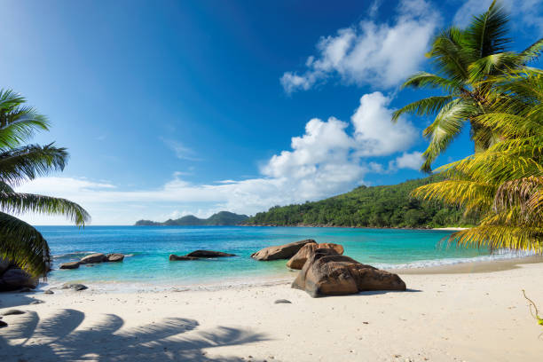 paradise beach on tropical island - jamaica stock photos and pictures