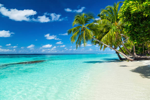 paradise beach - beach stock pictures, royalty-free photos & images