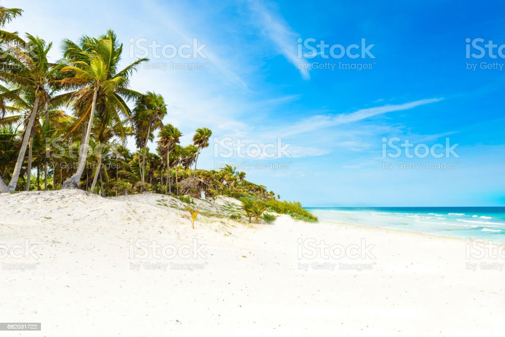 Paradise beach with beautiful palm trees - Caribbean sea in mexico, Tulum stock photo