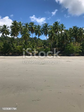 1145102719istockphoto paradise beach with palm trees in Costa Rica 1023081794