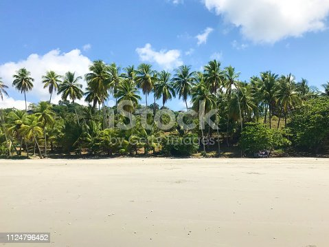 1145102719istockphoto paradise beach with palm trees in Costa Rica 1124796452