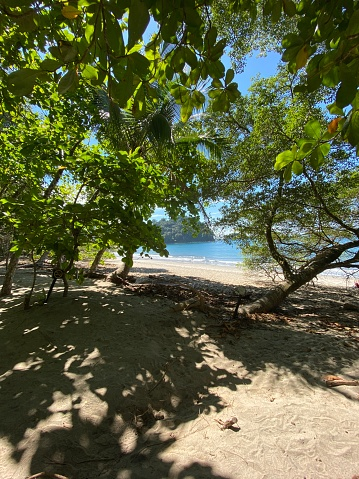 A paradise beach with some trees at the Costa Rican Pacific with fine
