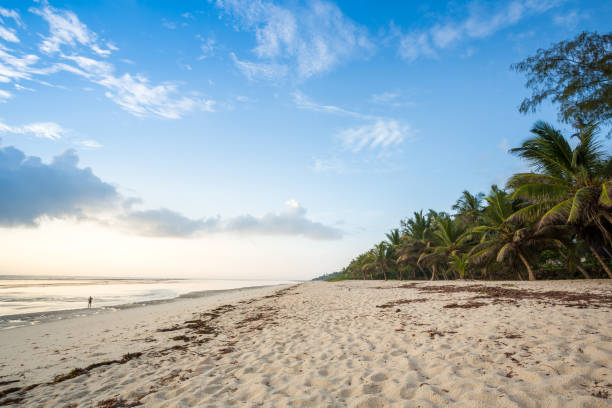 Paradise beach with white sand and palms – Foto