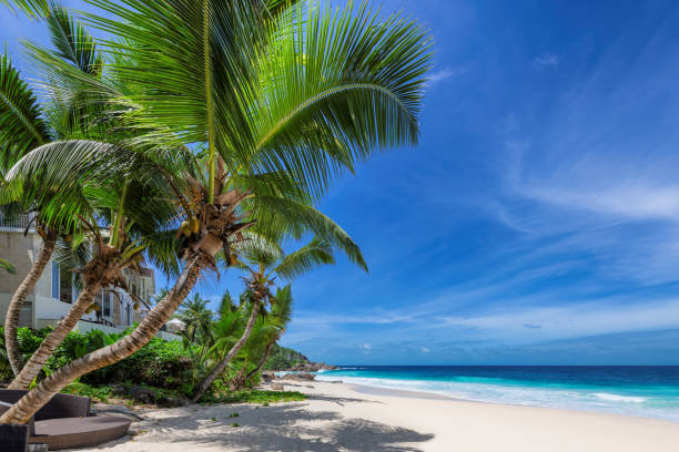 Paradise Caribbean beach with coco palms stock photo