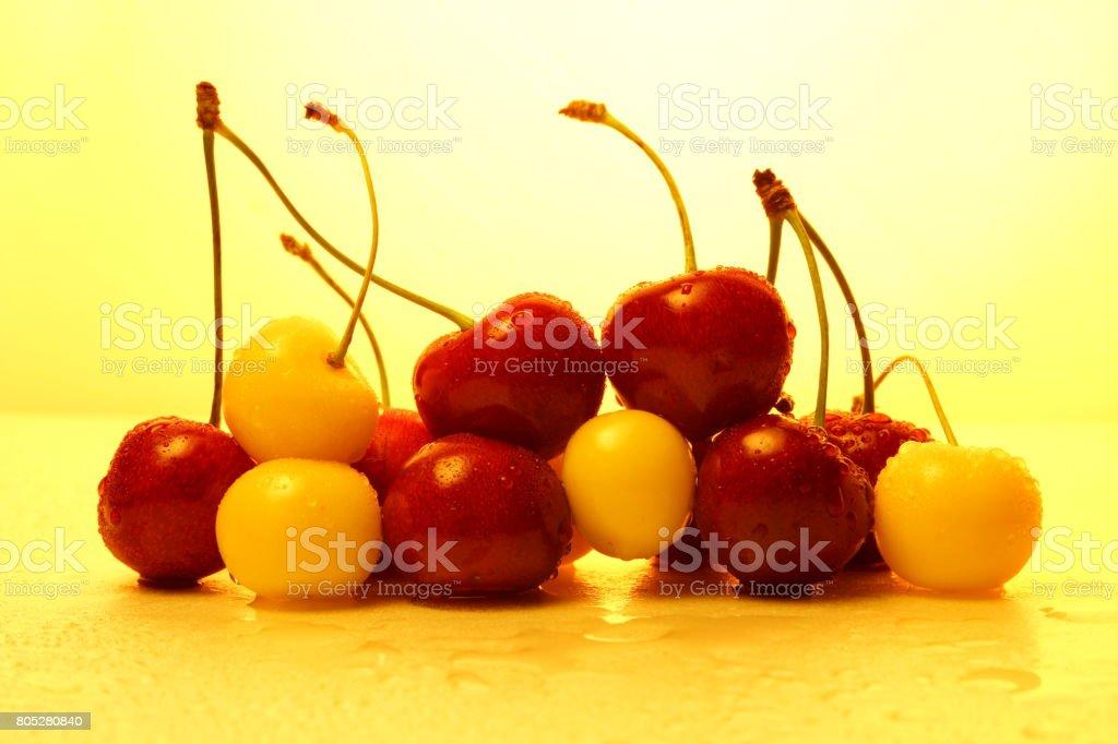 Paradise cherry stock photo