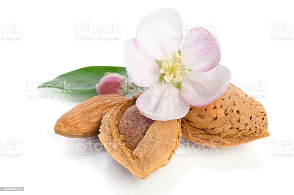 Paradise flower with almond nuts isolated on white background stock photo
