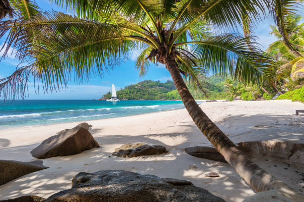 paradise island with palm trees and a sailing boat - fiji stock photos and pictures