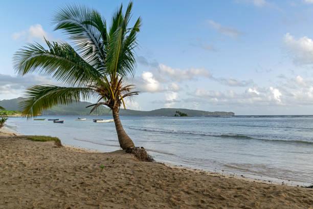 Paradise on the Caribbean beach stock photo