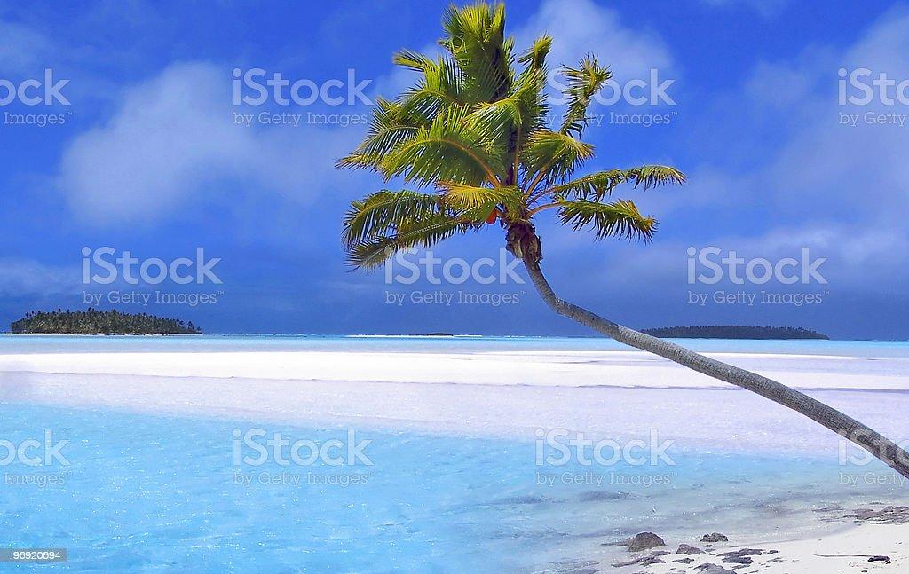 Paradise Palm royalty-free stock photo
