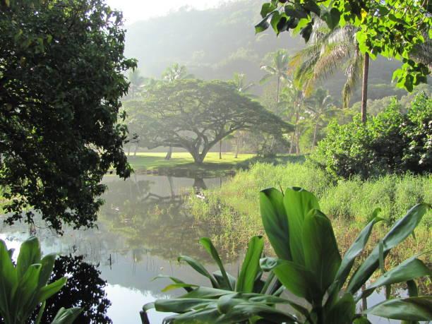 o paraíso  - jardim do eden - fotografias e filmes do acervo