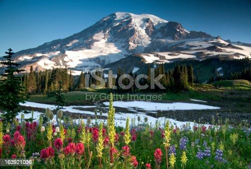 Mount Rainier during highland wildflower bloom, Washington State