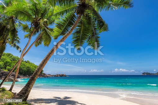 Paradise sandy beach with coco palm and tropical sea. Travel and vacation concept.