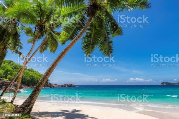 Paradise sandy beach with coco palm picture id1126610893?b=1&k=6&m=1126610893&s=612x612&h=gwun15pvgdiitlquvhggblxgqcsopy8nsztrwidmcxq=