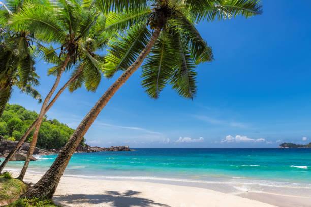 playa paraíso arena con palma de coco - playa fotografías e imágenes de stock