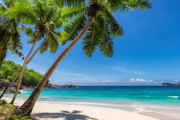paradise sandy beach with coco palm - beach stock pictures, royalty-free photos & images