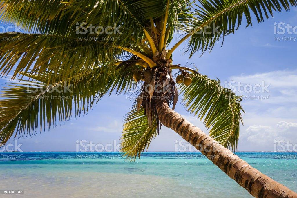Paradise tropical beach and lagoon in Moorea Island zbiór zdjęć royalty-free