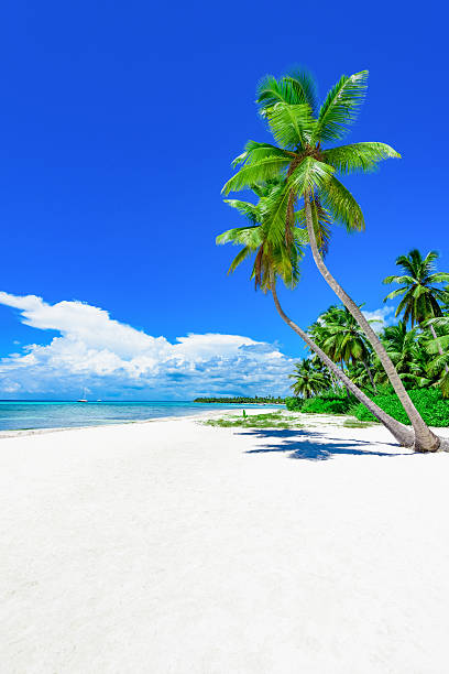 paradise tropical beach palm Paradise nature, sea on a tropical beach with green tree palm big island hawaii islands stock pictures, royalty-free photos & images