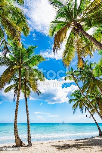 istock paradise tropical beach palm 855554612