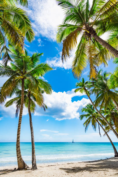 paradise tropical beach palm - pacific islands stock pictures, royalty-free photos & images