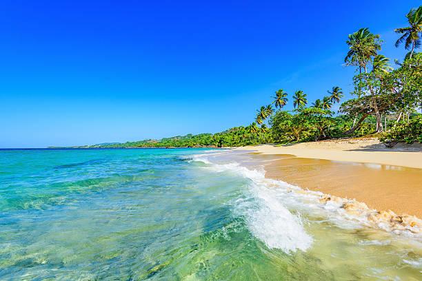 paradise tropical beach stock photo
