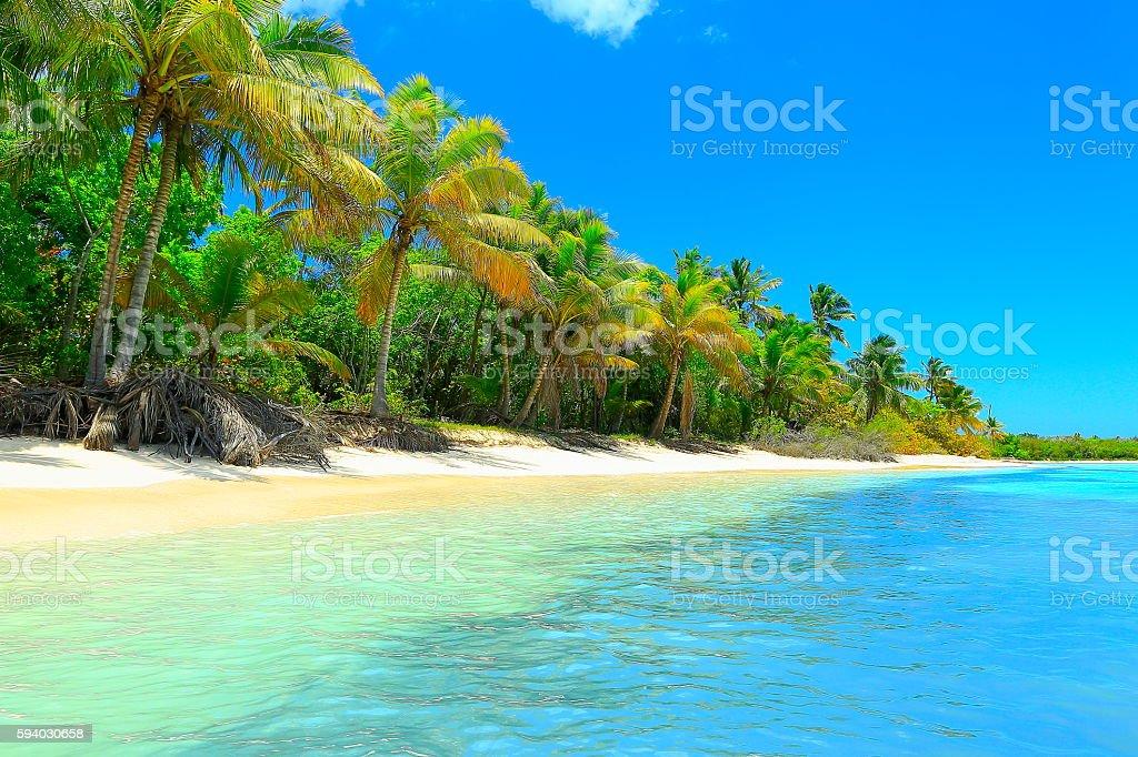 Paradise: tropical Idyllic Sandy beach, Palm trees, Dominican Republic - foto de stock