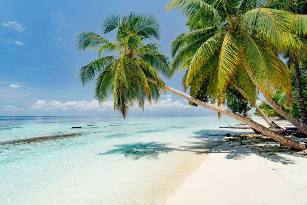 Paradisiac beach at Maldives stock photo