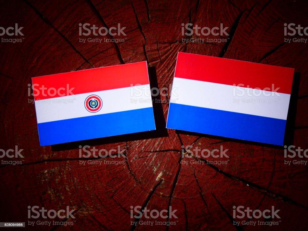 Bandera de Paraguay con la bandera holandesa en un tocón de árbol aislado - foto de stock