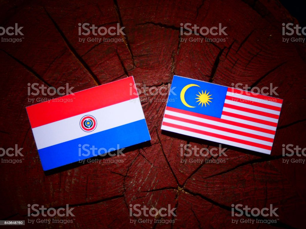 Paraguay flag with malaysian flag on a tree stump isolated stock flag malaysian flag paraguayan flag sign symbol buycottarizona