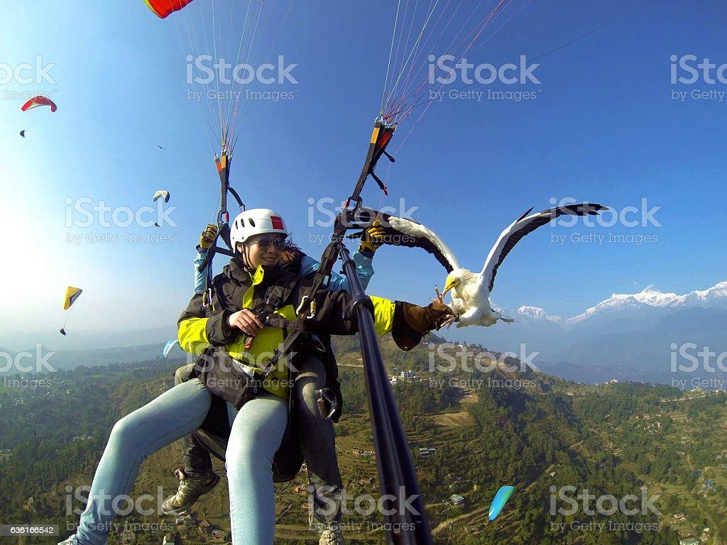 parahawking,fly with hawk stock photo