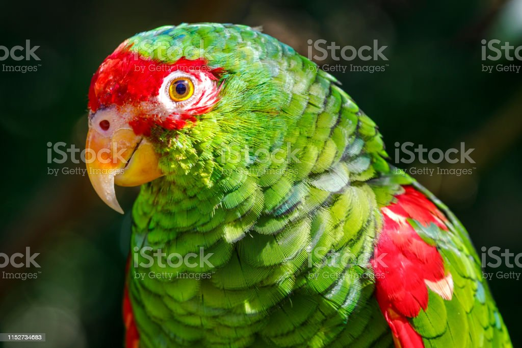Photo Libre De Droit De Perruche Perroquet Ara Tropical Bird Sur Fond Nature Pantanal Bresil Banque D Images Et Plus D Images Libres De Droit De Amerique Du Sud Istock