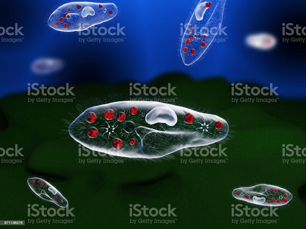 Paramecium stock photo