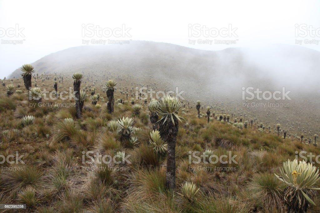 Champ de Paramo dans le parc Los Nevados, Colombia photo libre de droits