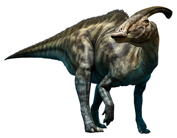 parasaurolophus walkeri - dinosaurier illustration stock-fotos und bilder