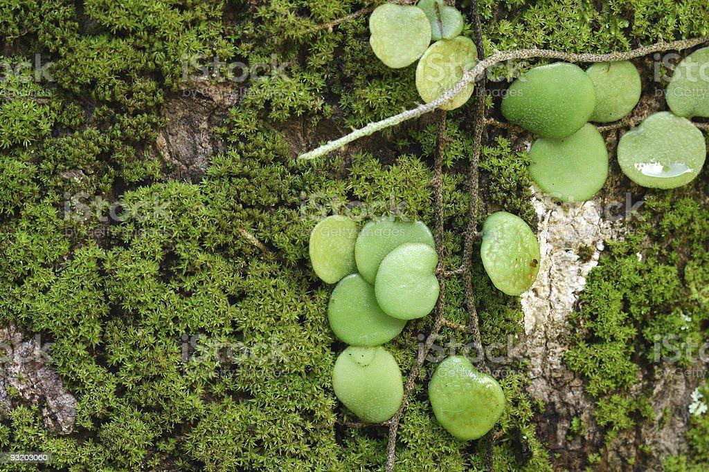 Parasit plant on Moss stock photo
