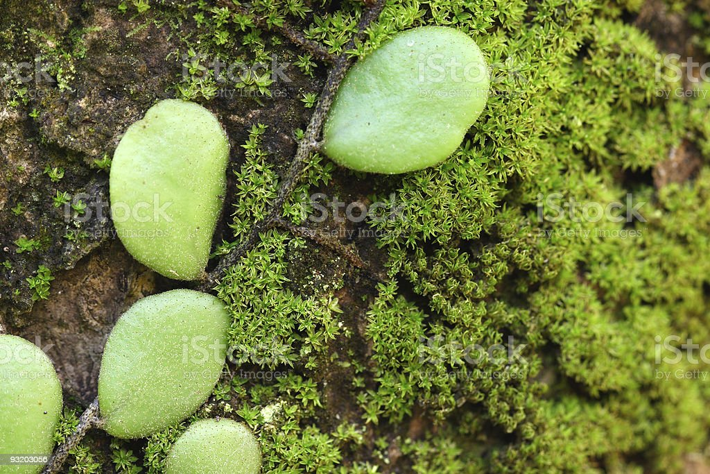 Parasit Plant with Moss close up stock photo