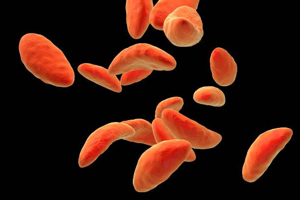 Parasitic protozoans toxoplasma gondii picture id824827842?b=1&k=6&m=824827842&s=612x612&w=0&h=ul7tbswwgotm u2do5nmojja2kdjvqxoax5qhvkampi=