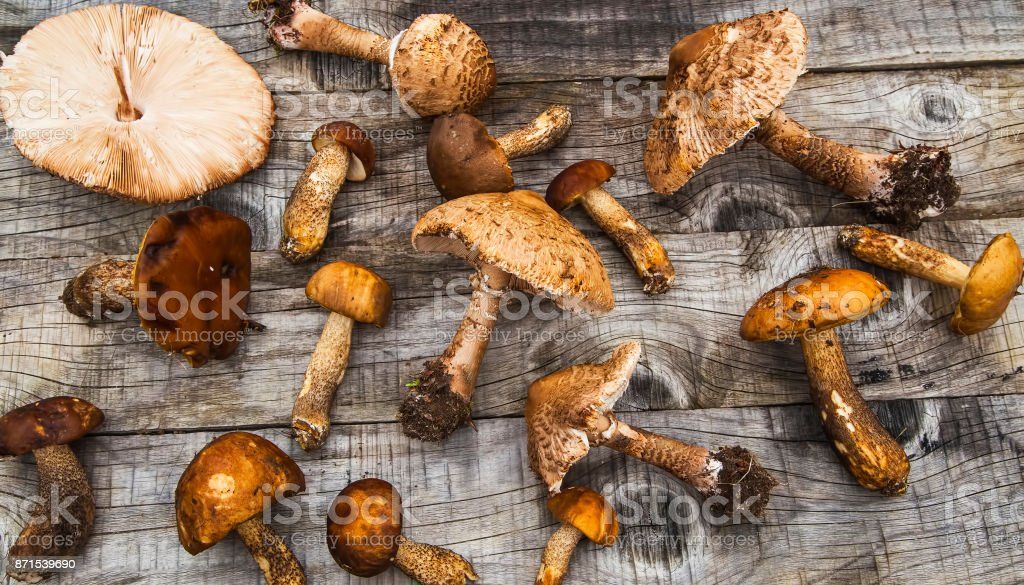 Parasol and boletus mushrooms, edible forest mushrooms on wooden table, top view stock photo