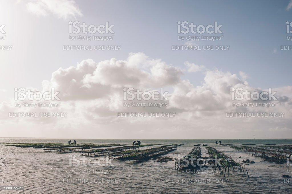 parc à huitres de l'ile de ré, élevage des huitres stock photo