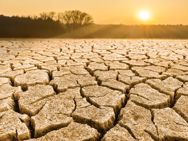 Parched cracked soil in landscape at sunrise stock photo