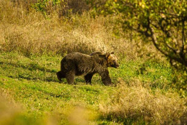 Abruzzo de Parco nazionale 8 - foto de stock