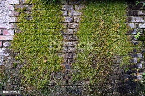 Parede de tijolos com musgo crescendo devido a humidade